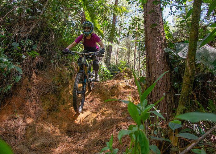 forest riding colombia