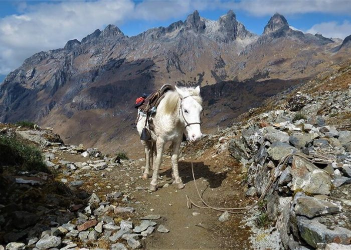 Horse on Salkantay Trek